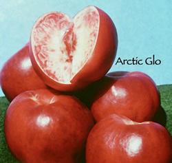 Arctic Glo Nectarine