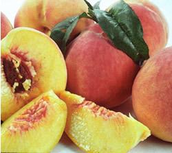 Loring Peach - Prunus persica 'loring'