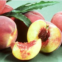 O'Henry Peach - Prunus persica 'o'henry'
