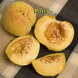 Polly White Peach - Prunus persica